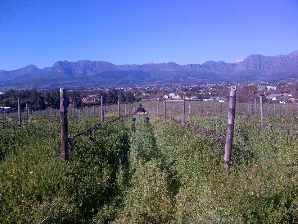 Rudera Wines - AgriQuads