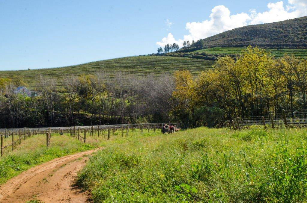 Rudera Wines - True blessing to enjoy the green landscape after sufficient rain broke the drought