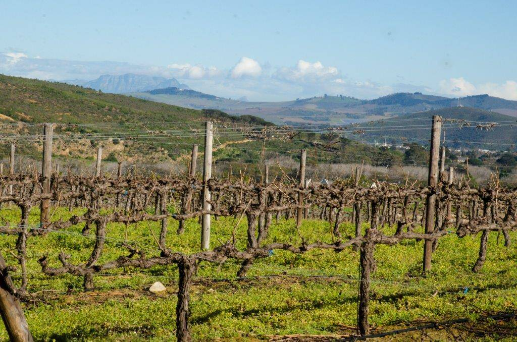 Rudera Wines - Vineyard with Table Mountain in background