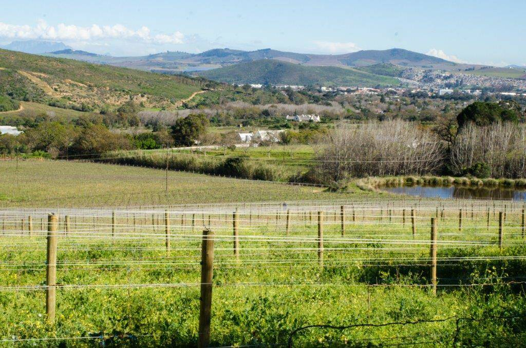 Rudera Wines Vineyard
